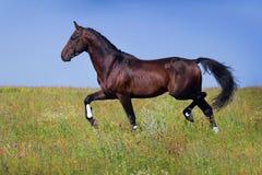 Trote do cavalo Fotografia de Stock Royalty Free