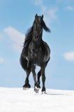 Trote preto dos funcionamentos do cavalo do frisão no inverno imagem de stock