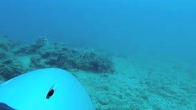'trotinette' 4 do mergulho autônomo ST video estoque