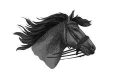 Trotón del caballo en bosquejo del vector del freno que compite con Imagenes de archivo