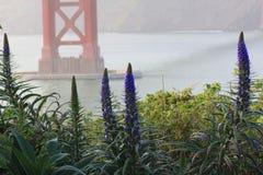 Trots die van de bloemen van Madera dichtbij Golden gate bridge groeien Stock Fotografie