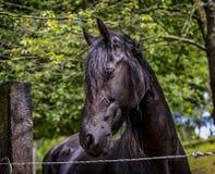 Trots paard Stock Afbeelding
