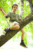 Trotse die jongen in boom wordt beklommen Royalty-vrije Stock Afbeelding