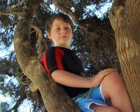 Trotse jongen in boom Stock Afbeelding