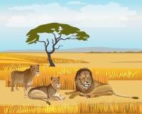 Trotsleeuwen in de savanne vector illustratie