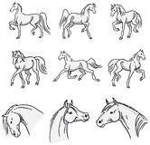 Trotting Arabian Horses Stock Photography