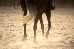 Trotting away horse legs close up Royalty Free Stock Images