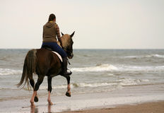 Trotting on the beach. A horse and rider in a trot on the beach Stock Images