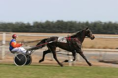 Trotting horse. Trotting (harness racing) horse in the home stretch in Canterbury, New Zealand stock photos