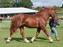 Trotting Horse Royalty Free Stock Image