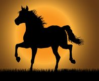 Trotting horse. Best of the paces of horses, so beautiful and hardy, over wonderful sunrise royalty free illustration
