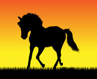Trotting horse. Best of the paces of horses, so beautiful and hardy, over wonderful sunrise stock illustration