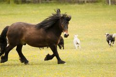 Trotting horse Stock Photos