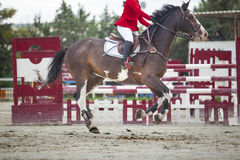 Trotting before overtaking the obstacle at horse jumping competi Stock Photo