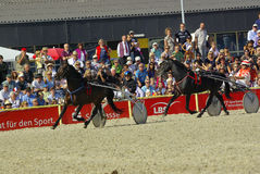 Trotting race, Marbach Stallion Parade Stock Photography
