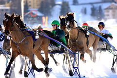 Trotting Race in the snow Stock Photography