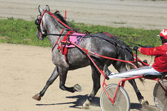 Trotting Races at the Hippodrome Sibirskoe Stock Image