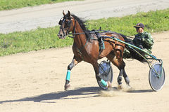 Trotting Races at the Hippodrome Sibirskoe Royalty Free Stock Image