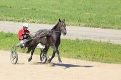 Trotting Races at the Hippodrome Sibirskoe Stock Photo