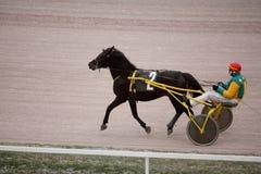 Trotto del cavallo che corre sull'ippodromo di Mosca Fotografia Stock Libera da Diritti
