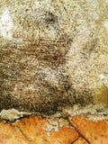 Trottoar från röda tegelstenar Bakgrund cement Royaltyfria Foton