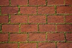 Trottoar med gräs Royaltyfri Foto