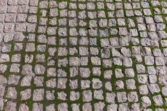 Trottoar med mossa som växer i skarvar Arkivfoton