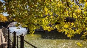Trottoar vid flodstranden av festfloden på en solig dag under ett kastanjebrunt träd i Berlin, Tyskland arkivbilder