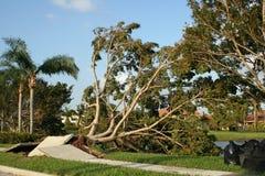 Trottoaren och träd rivas sönder upp från orkansegrar royaltyfri foto