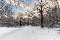 Trottoarer i botaniska trädgården på Ostankino, Moskva Arkivfoto