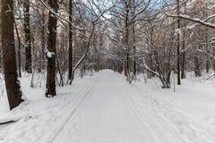 Trottoarer i botaniska trädgården på Ostankino, Moskva Royaltyfri Foto