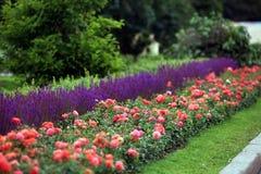 Trottoarkanten i parkera av rosor och vis man Royaltyfria Bilder
