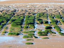 Trottoarsandtonebildande på den Hunstanton stranden norfolk Fotografering för Bildbyråer