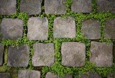Trottoarstenar med gräs Arkivfoton