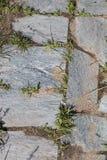Trottoir antique fait avec la pierre et l'herbe images libres de droits