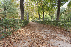 Trottoir avec des lames d'automne Photo stock