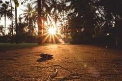 Trottoir avec les feuilles tomb?es au temps de coucher du soleil image libre de droits