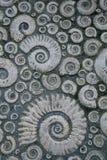 Trottoir décoré des ammonites fossiles en pierre Photos libres de droits