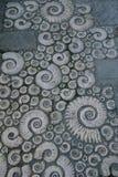 Trottoir décoré des ammonites fossiles en pierre Images stock