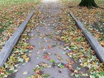 Trottoir sali avec des feuilles en automne Images stock