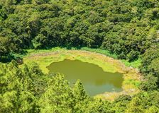 Trou Aux Cerf volcano. Aerial  view  of Trou Aux Cerf Volcano also known as Murr`s Volcano in the tropical tropical plants, Mauritius island Royalty Free Stock Images