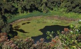 Trou Cerfs aux. un volcán dominante en Mauricio foto de archivo