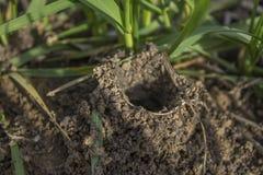 Trou d'araignée dans la terre photographie stock libre de droits