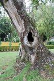 Trou d'arbre Images libres de droits