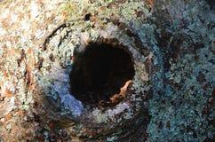Trou d'arbre image stock