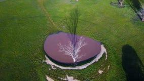Trou d'eau avec le vieil arbre mort banque de vidéos
