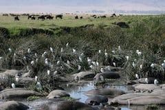 Trou d'eau - cratère de Ngorongoro, Tanzanie, Afrique Photographie stock