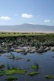 Trou d'eau - cratère de Ngorongoro, Tanzanie, Afrique Photo stock