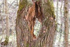 Trou dans l'arbre photo stock