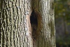 Trou dans le tronc d'arbre image libre de droits